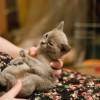 cats-9792
