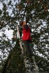 Машечка на дереве