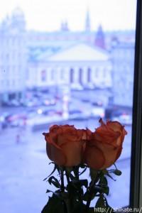 роза1_shikate