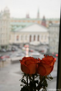 роза2_shikate
