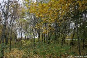 05_leaves