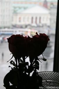 roza_brr