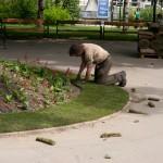 В саду - стелят газоны