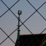 Петушок на палочке, Wienn, Austria